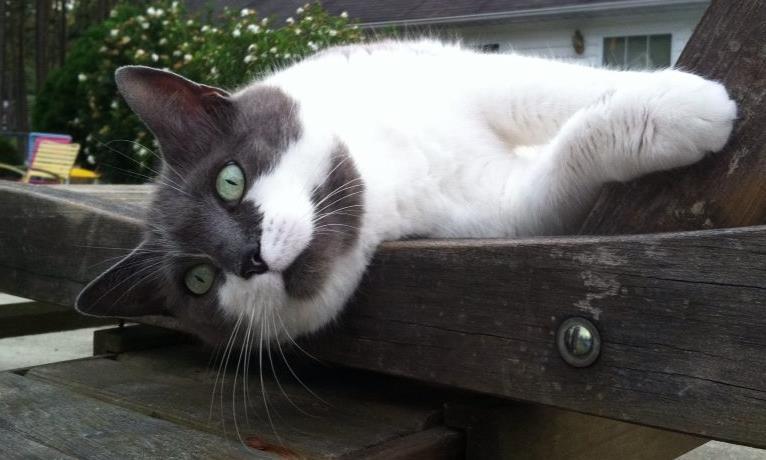 Feline health