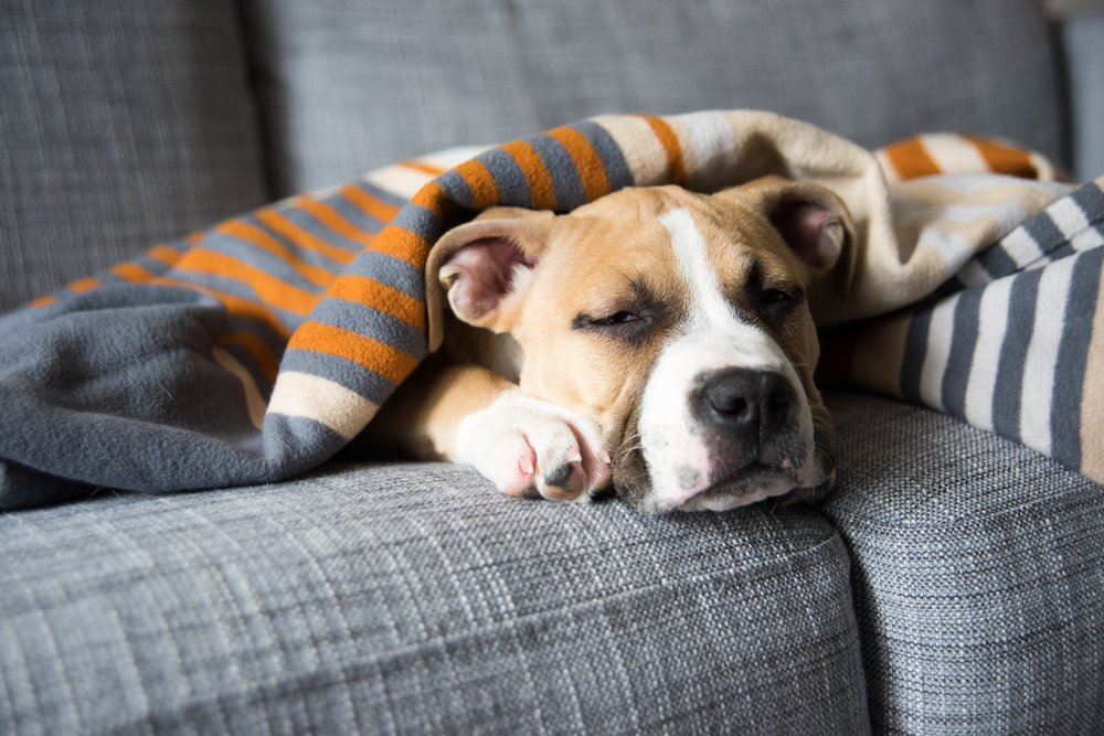 Signs That Your Pet May Be Suffering From Cancer